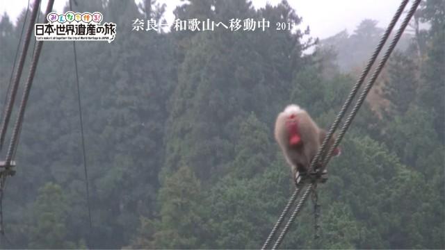 2011年の猿と吊り橋を検証 BINGOの旅関西おまけ②